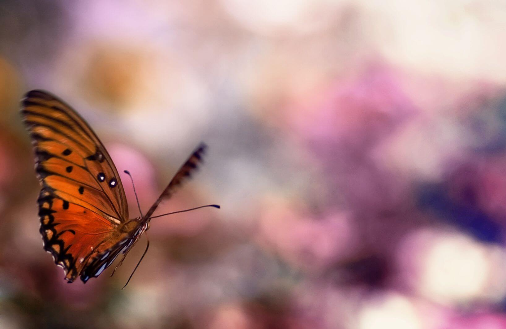 Adapt like a butterfly